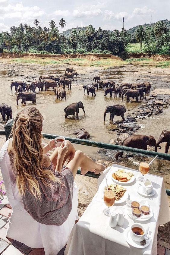 pinnawala-elephant-orphanage_1698_jpg